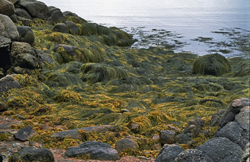 Algae-Patterns-on-Rocks-200